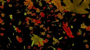 stock-footage-colorful-autumn-maple-leaves-in-shades-of-red-orange-green-gold-and-brown-fall-against-a-black