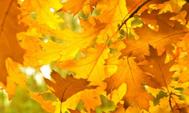 yellow-fall-foliage