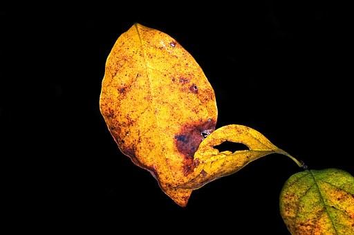 leaf-thanksgiving